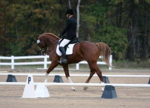 stalliontestdressage110907compressed.jpg
